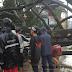 Pohon Ukuran Raksasa Tumbang Timpa 2 Mobil di Jalan Raya Sukabumi - Bandung