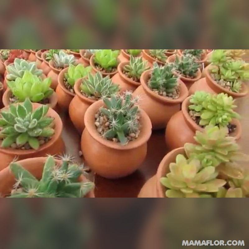 Centros-de-mesa-para-Boda-con-cactus-y-suculentas---15