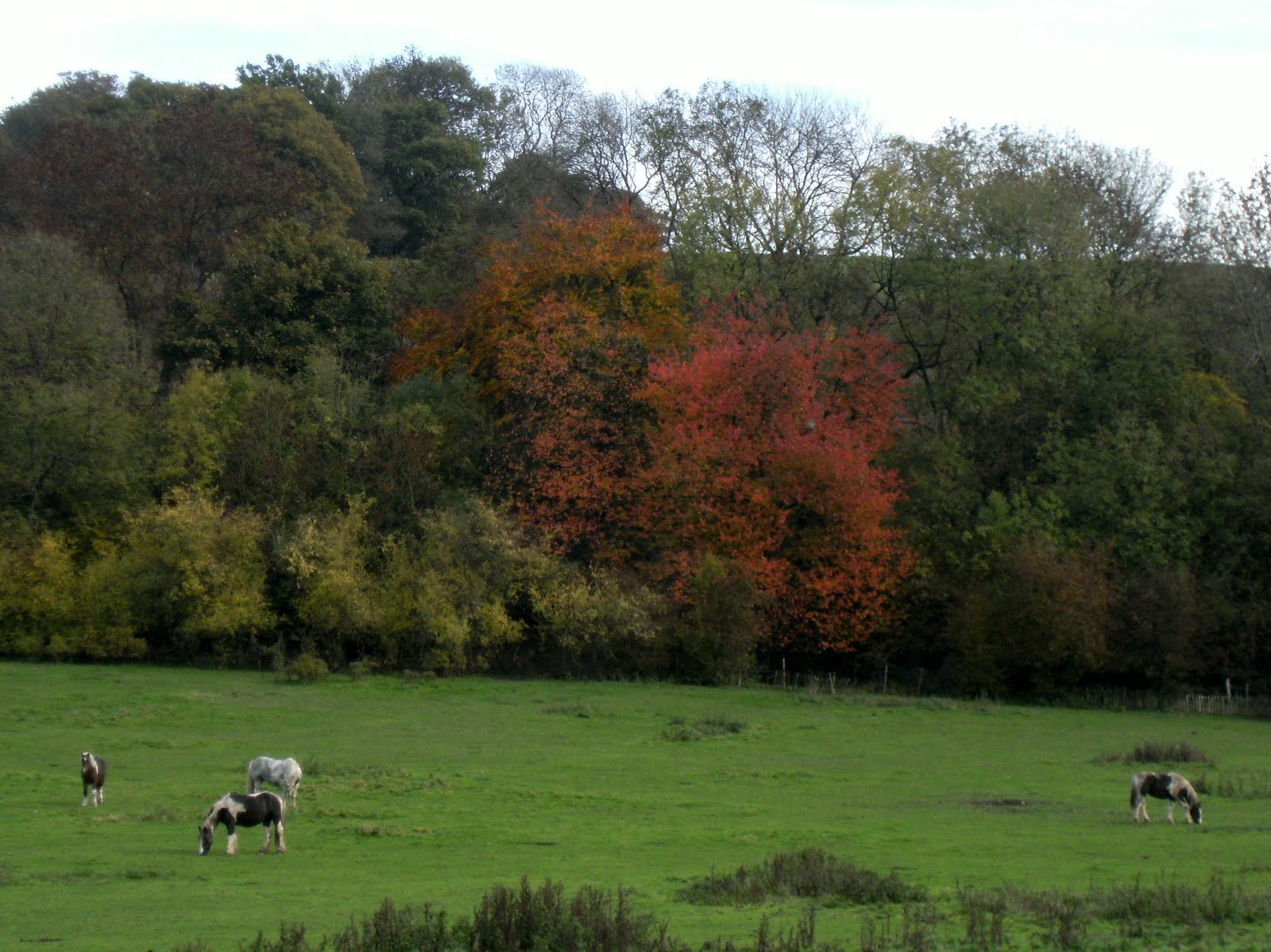 1010300014 Autumn colours on the North Downs Way