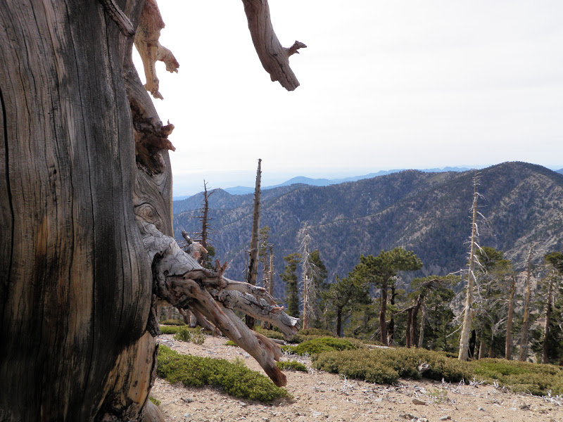 Mount Baden-Powell • View of Los Angeles