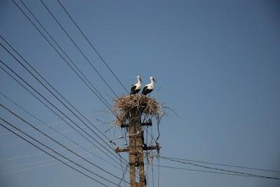 Storchennest auf Strommast