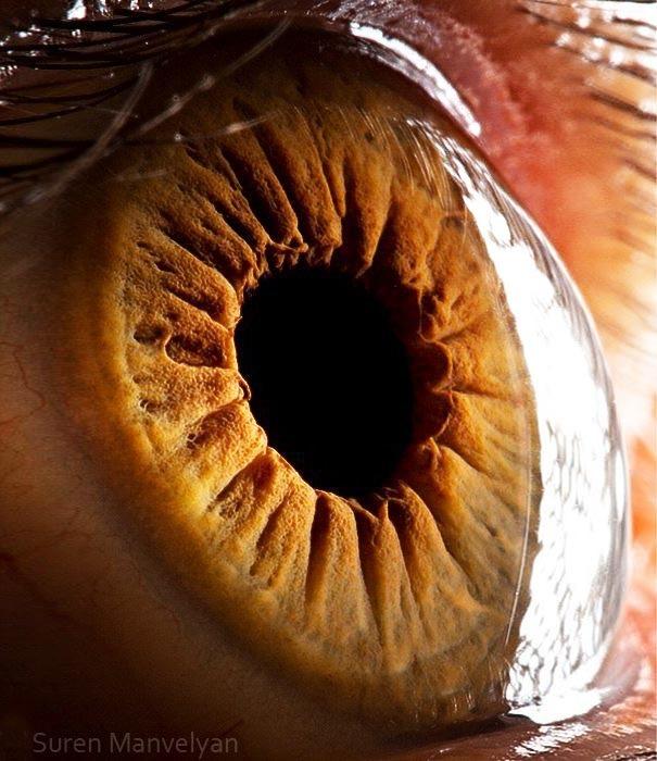 human eyes 1 (14)