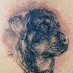 Rottweiler #2