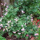 Gardening 2014 - 116_1821.JPG