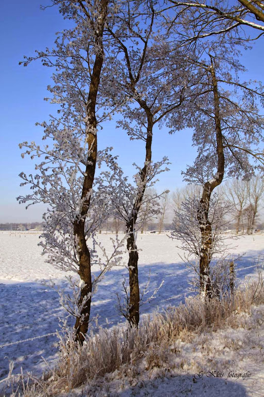 Winter - Winter-039.jpg