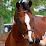horsegirl 2002's profile photo