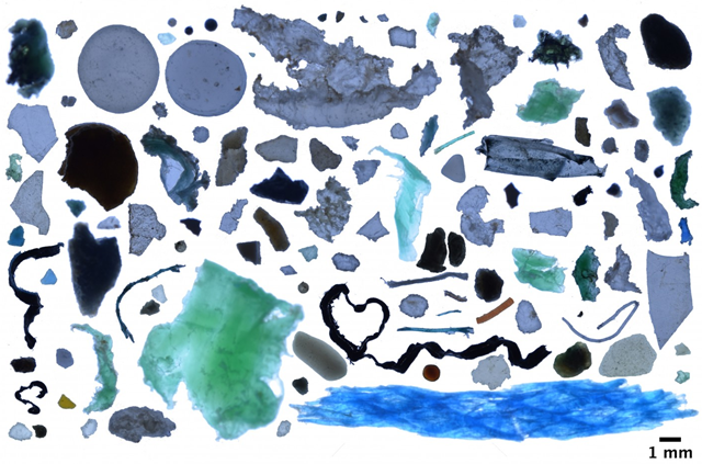 Photo collage of plastic fragments found in the Arctic Ocean. Although plastic debris was scarce in most of the Arctic waters, it reached high concentrations in areas of the Greenland and Barents seas. Photo: Andres Cozar