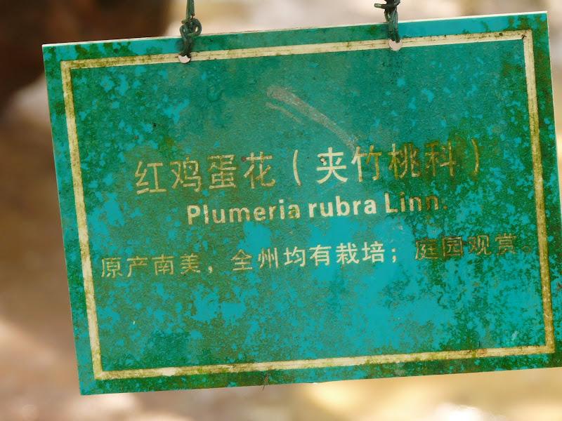 Chine .Yunnan . Lac au sud de Kunming ,Jinghong xishangbanna,+ grand jardin botanique, de Chine +j - Picture1%2B672.jpg