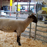 Fort Bend County Fair 2014 - 116_4220.JPG