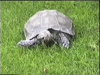 1998.09.09-028 tortue