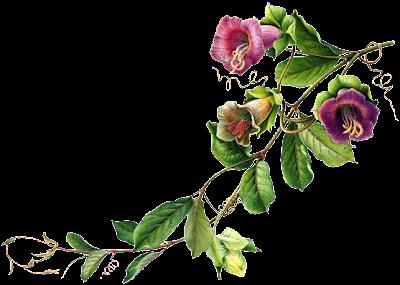amagem de flores