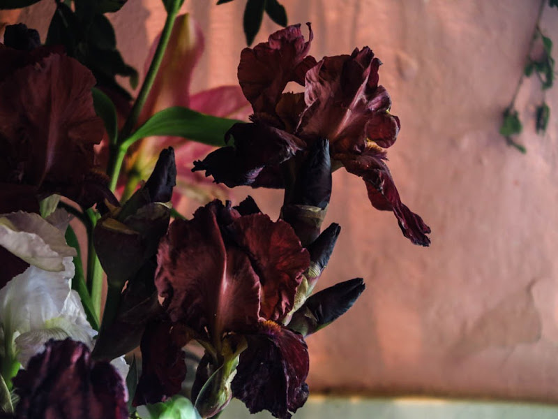 Slow Flowers Italy-15