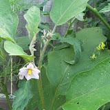 Gardening 2010, Part Three - 101_3777.JPG