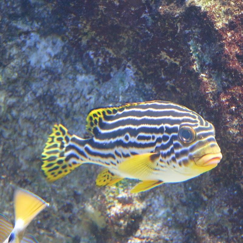 Aquarium_11.JPG