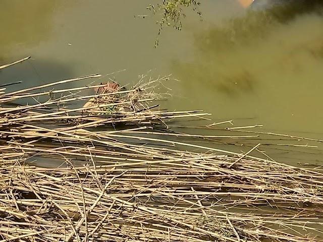 Morador de Divino que estava desaparecido tem corpo encontrado boiando no rio Carangola