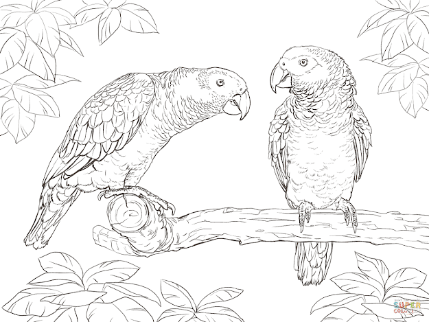Two African Grey Parrots