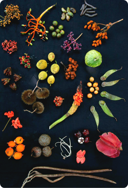 Biodiversity-Forest_fruits_from_Barro_Colorado