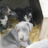 Star & True Blues February 21, 2008 Litter - HPIM1096.JPG