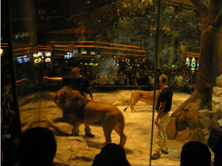 Lion Habitat at the MGM Grand Hotel and Casino