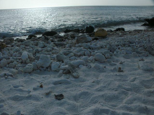 Bonaire 2011 - PICT0090.JPG