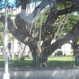Hawaii Day 3 - 114_1114.JPG
