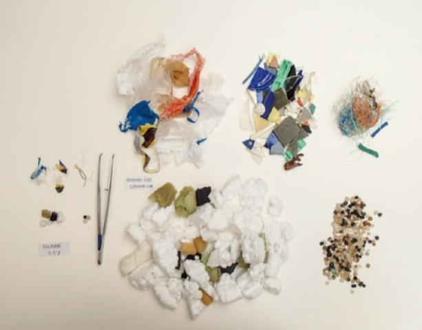 Average plastic abundance in a Fulmar stomach (left of tweezers) and the equivalent amount of plastic at human stomach scale (right of tweezers). Photo: Jan van Franeker / IMARES, in Foresight Evidence Review: Plastic Pollution (2017)