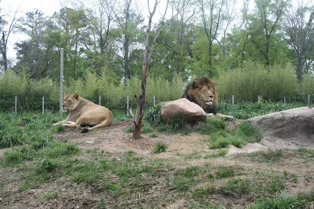 Zoo Snooze 2015 - IMG_7190.JPG