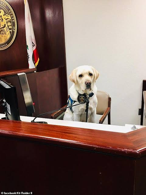 CAN SMART ANIMALS GIVE EVIDENCE IN COURT?