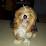 gilces calderon washington's profile photo