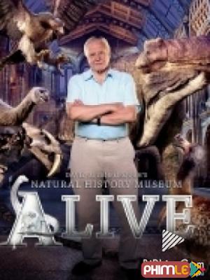 Phim Bảo Tàng Lịch Sử Tự Nhiên Sống Của David - David Attenboroughs Natural History Museum Alive (2013)