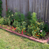 Gardening 2010, Part Two - 101_3007.JPG