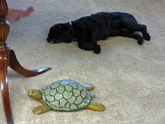 Bubba and Turtle (I think the Turtle is winning the race)