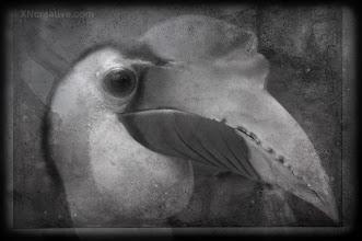 Photo: Hornbill