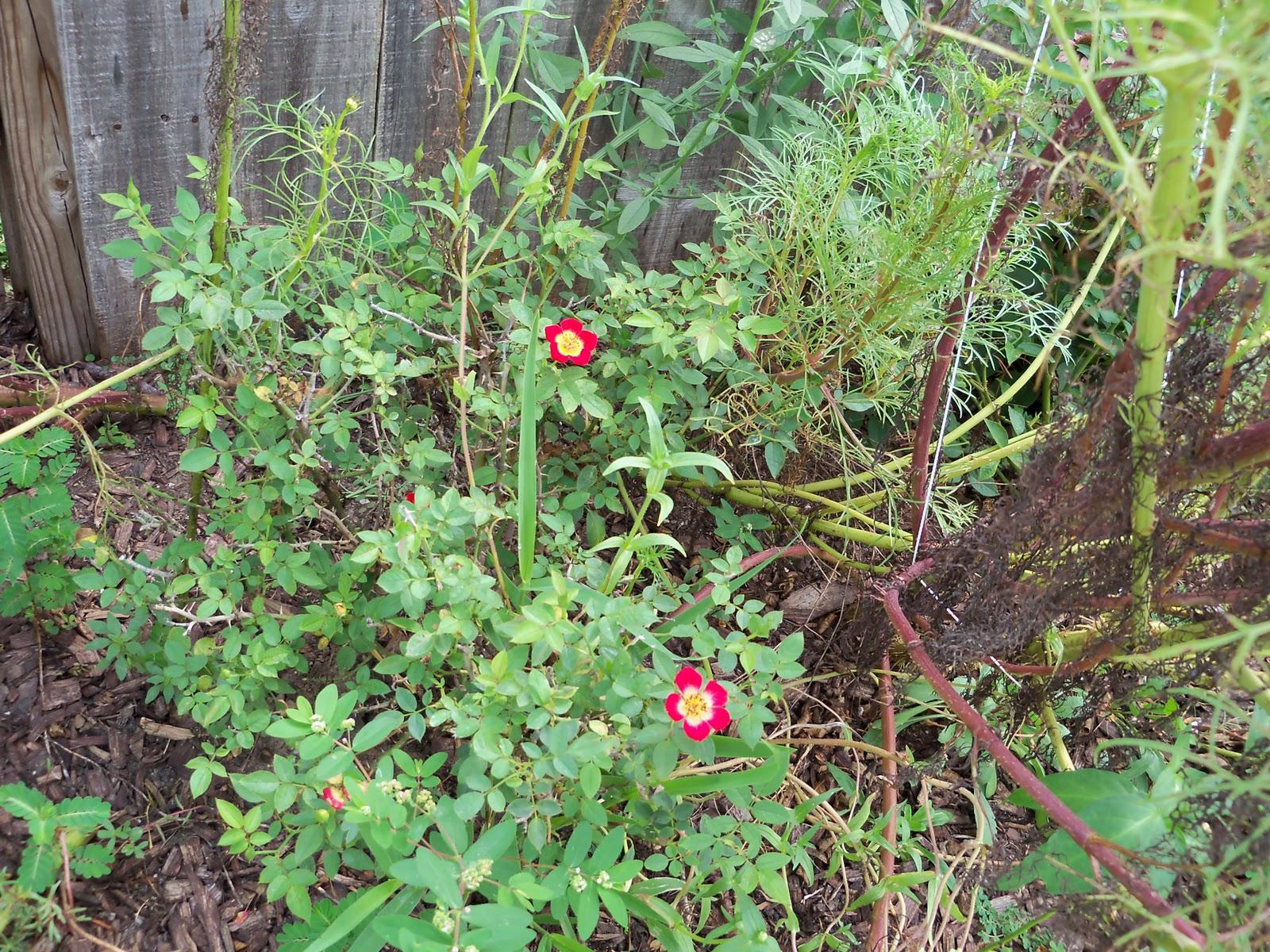 Gardening 2010, Part Three - 101_5175.JPG