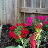 Gardening 2011 - 100_6979.JPG