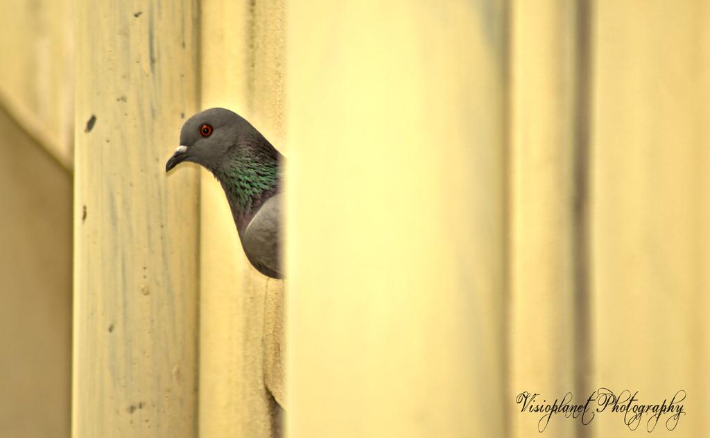 I Hide, You Seek! by Sudipto Sarkar on Visioplanet