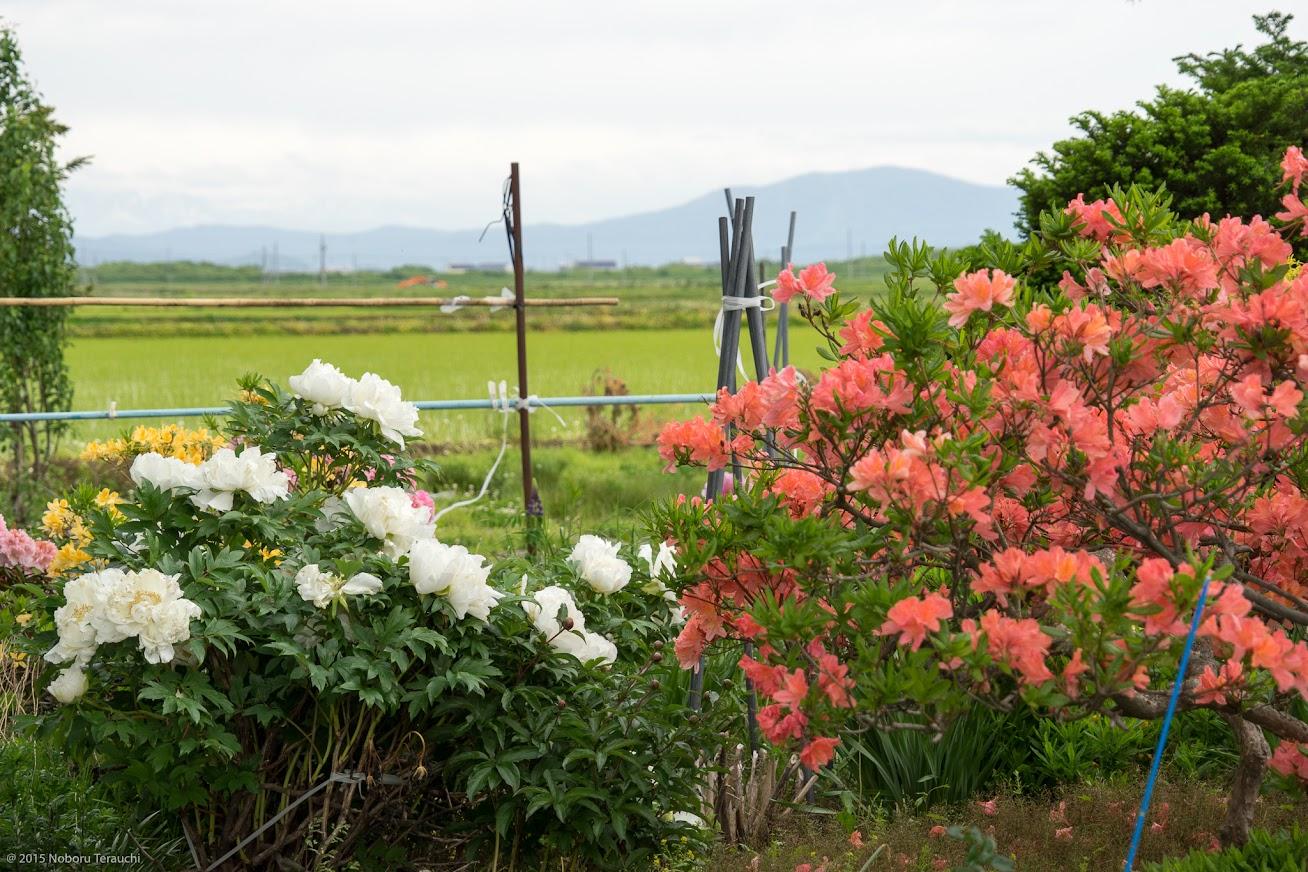 庭を飾る花々