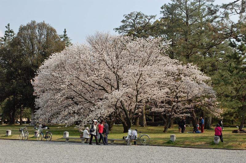 2014 Japan - Dag 10 - jordi-DSC_0881.JPG