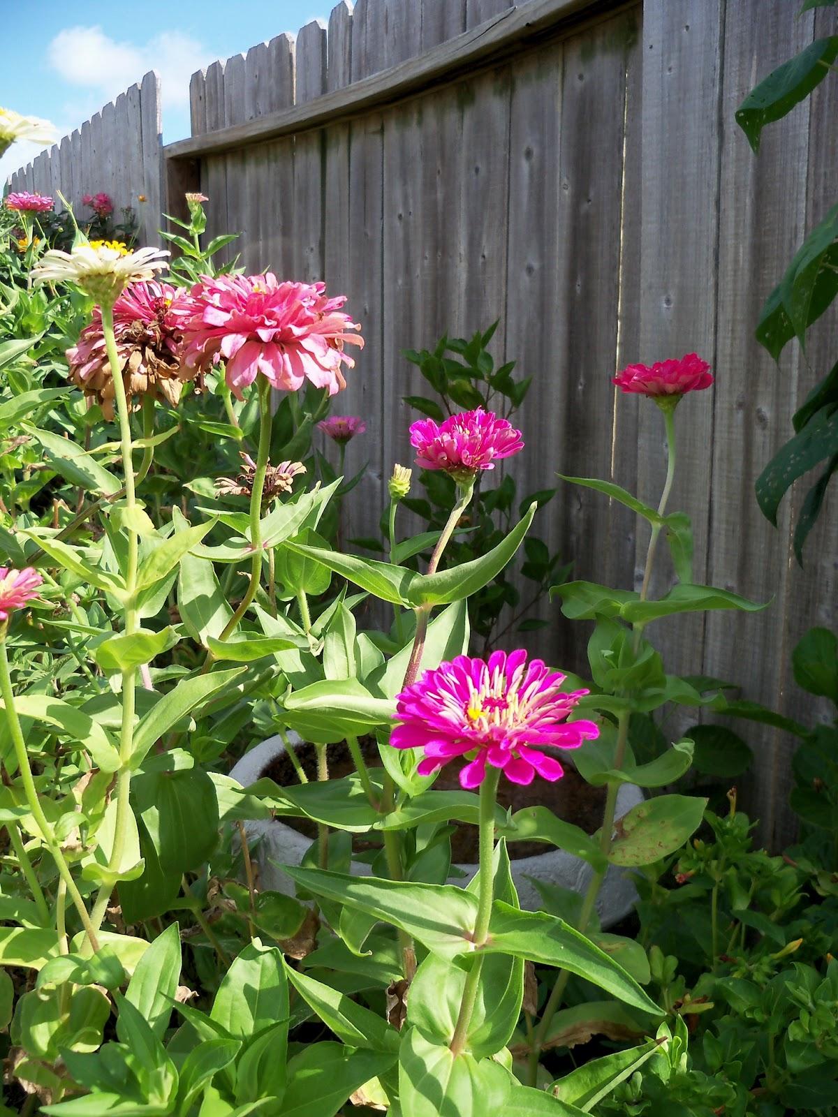 Gardening 2011 - 100_9971.JPG
