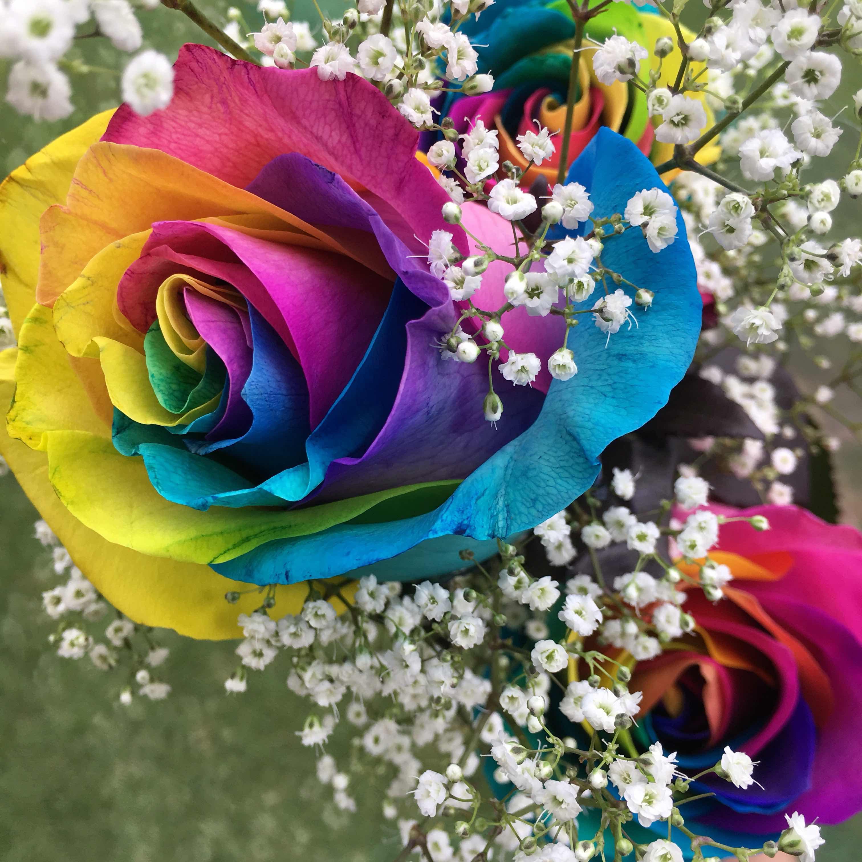 Hawaii Mom Blog Rainbow Roses From Flos Min Florist