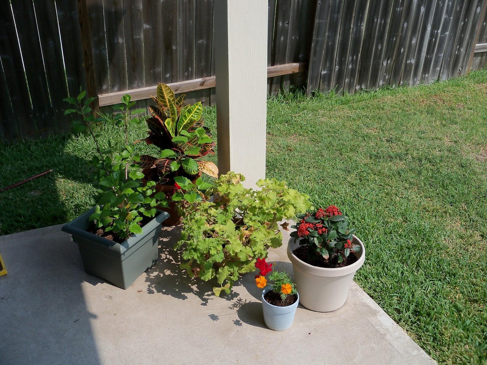 Gardening 2011 - 100_9463.JPG
