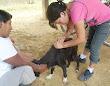m_saritachanchamayo2010 (14)
