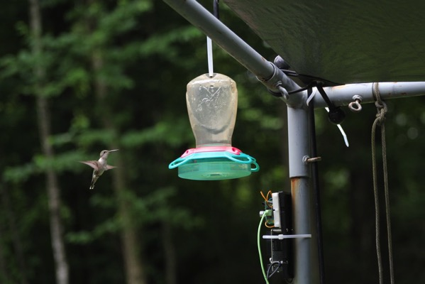 Hummingbird Detector/Picture-Taker via Instructables