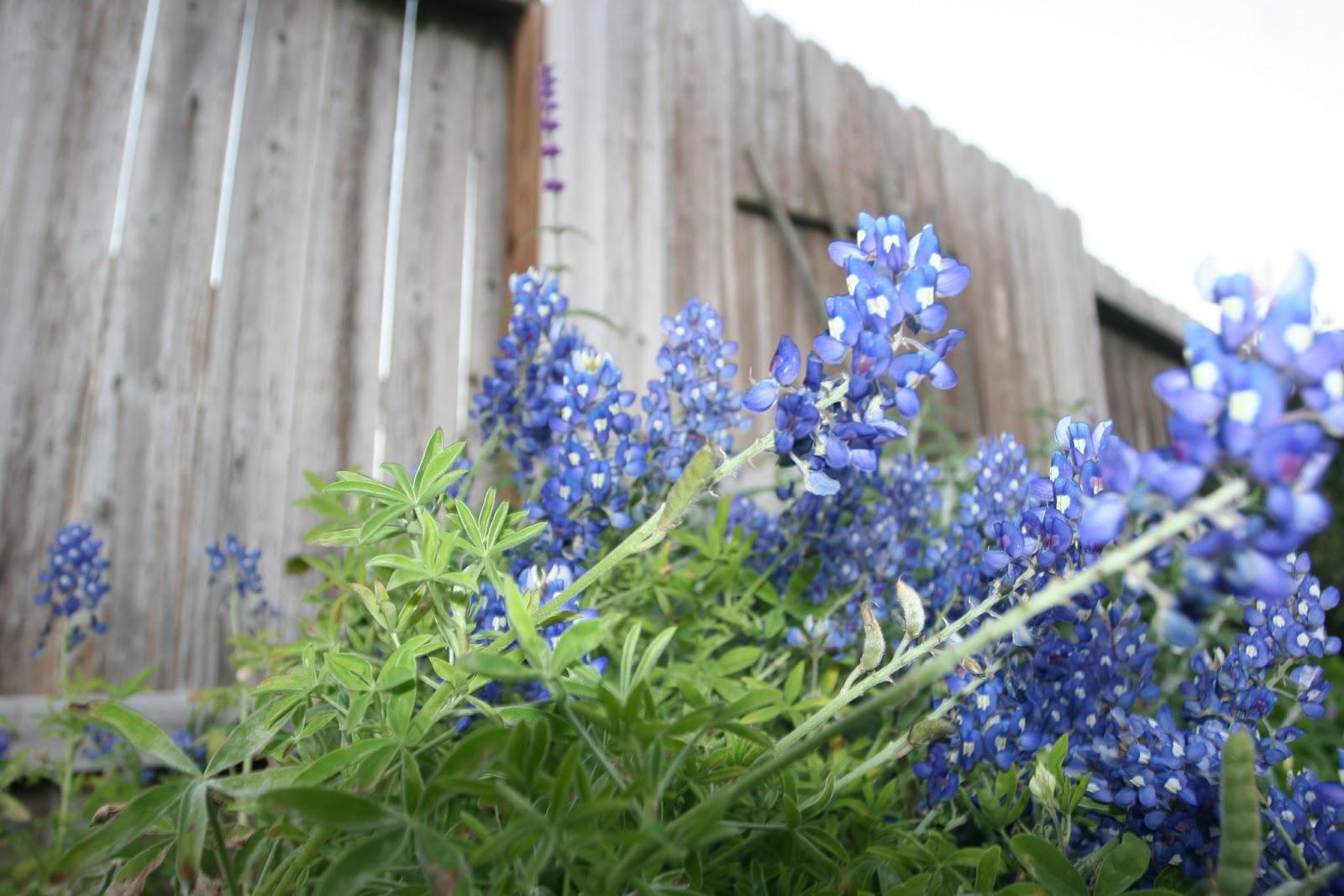Gardening 2012 - IMG_2762.JPG