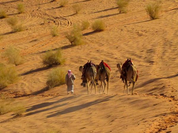 Camelos em Wadi Rum