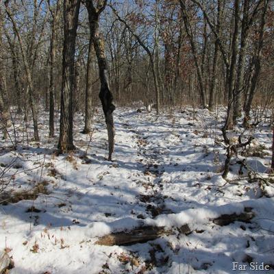 deer trails (2)
