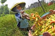 Sektor Pertanian Diyakini Terus Tumbuh Positif di Kuartal II