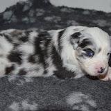 2013-11-08 Gina pups dag 25