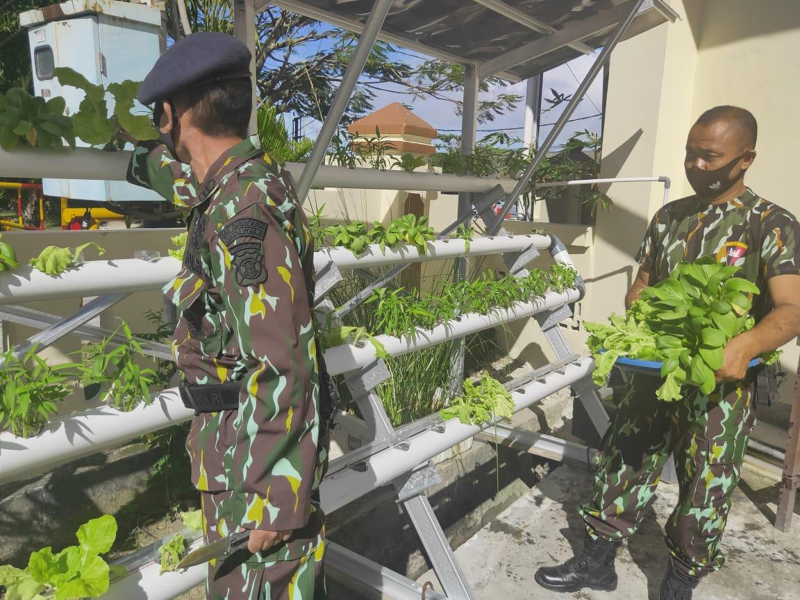 Dukung Ketahanan Pangan, Brimob Panen Sayur Hidroponik Lalu Bagikan ke Masyarakat Balikpapan