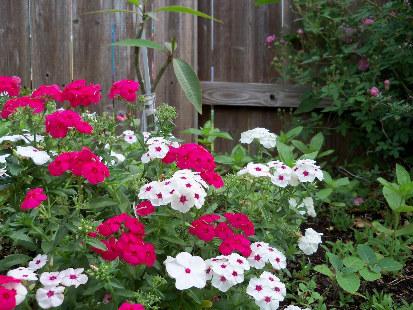 Gardening 2013 - 115_6011.JPG